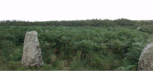 One of the lucky ones: Boscaswen Un stone circle, partly overwhelmed by bracken years ago but (now liberated thanks to painstaking clearance work by CASPN).