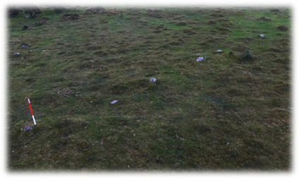 The stone alignment includes a line of small stones leading NNE up a gentle slope on Shaugh Moor.