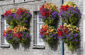 Use the trackway to grow hanging baskets like these!