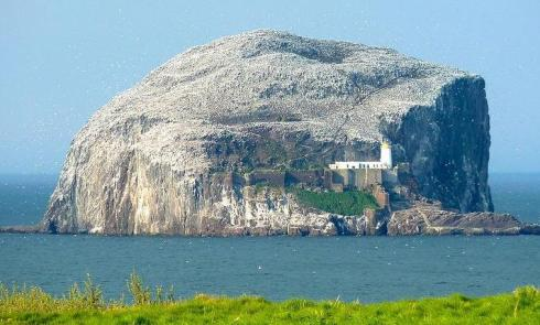 Bass Rock, a tiny island in the Firth of Forth containing the world's largest gannet colony. A windfarm is proposed nearby. Academics estimate that 1,500 gannets a year will be killed by the turbines.