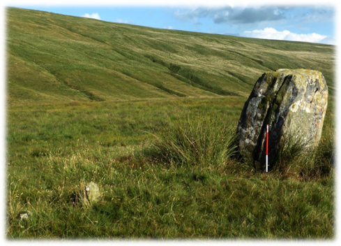 "Perhaps this alignment was ""overlooked"" because it did not fit the storyline. Stones of very different sizes at the single alignment at Maen Mawr. (Scale 1m.)"